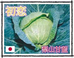 楓蘋果 一代交配 梨山(初恋)甘藍種籽 關鍵字:梨山高麗菜、初恋高麗菜、初戀高麗菜、高麗菜種子、甘藍種子、蔬菜種子、種籽