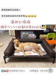 (M號)圍枕寵物行軍床 寵物床 寵物透氣床 寵物高架床 寵物飛行床 寵物涼床 寵物涼墊
