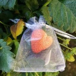 (100入)10x15cm(大草莓專用)防鳥  網袋 防蟲 草莓套袋 雪紗袋 網袋 尼龍網袋 水果 雪砂袋 過濾