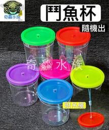 奇鱻水族【鬥魚杯】附吊繩 小型寵物飼養盒 顏色隨機出 鬥魚 烏龜 小魚 角蛙 兩棲 昆蟲