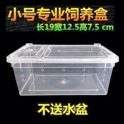 爬寵爬蟲飼養盒寵物蜘蛛蝎子蜈蚣角蛙守宮烏龜飼養箱小號盒小方盒暖貓先生店